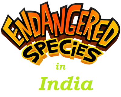 endangered-species-v2_brand_logo_image_bid
